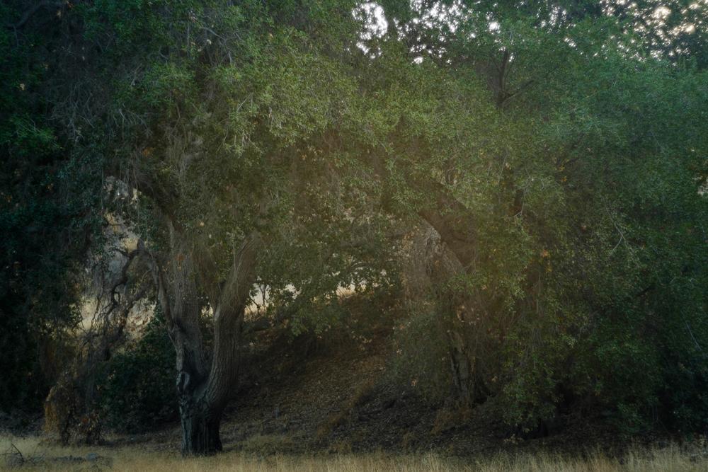 LA Nature-35